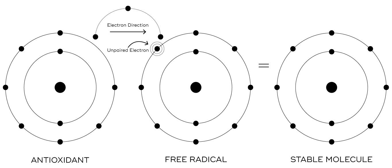 Vitamine C tegen vrije radicalen
